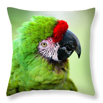 Parrot Throw Pillow by Sebastian Musial