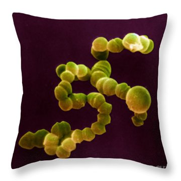 Sem Of Streptococcus Throw Pillow by David M Phillips