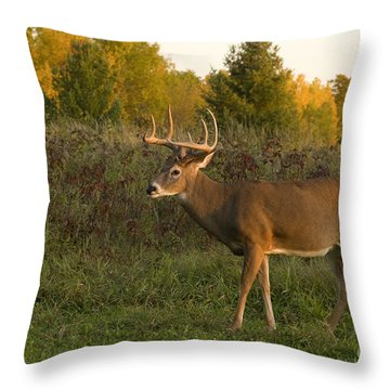 White-tailed Buck In Fall Throw Pillow by Linda Freshwaters Arndt