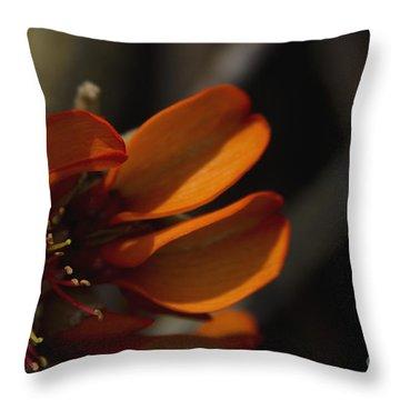 Wiliwili Flowers - Erythrina Sandwicensis - Kahikinui Maui Hawaii Throw Pillow by Sharon Mau
