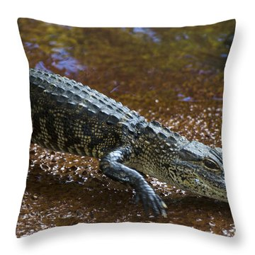 American Alligator Throw Pillow by Mark Newman
