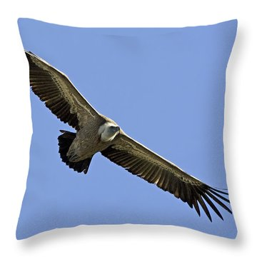 Griffon Vulture Gyps Fulvus Throw Pillow by Eyal Bartov