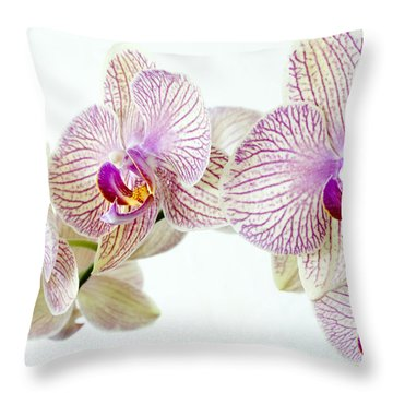 Phalaenopsis Orchid Phalaenopsis Sp Throw Pillow by Lawrence Lawry