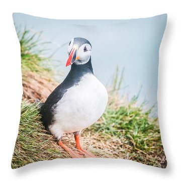 Atlantic Puffin Fratercula Arctica Throw Pillow by Panoramic Images