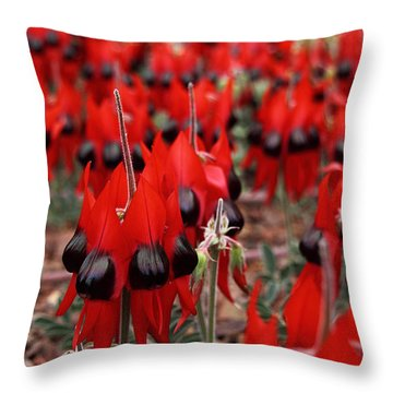 Sturt's Desert Pea Outback South Australia Throw Pillow by Carole-Anne Fooks