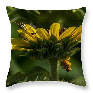 A Bugs World Throw Pillow by Ernie Echols