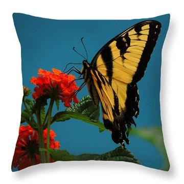 A Butterfly Throw Pillow by Raymond Salani III