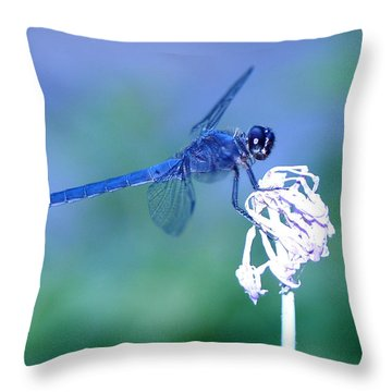 A Dragonfly V Throw Pillow by Raymond Salani III