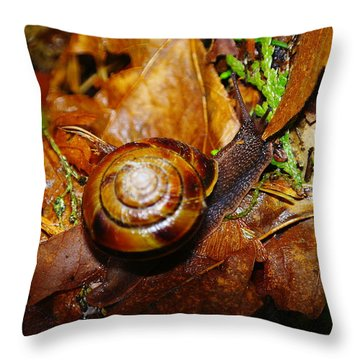 A Slow Snail Throw Pillow by Jeff Swan