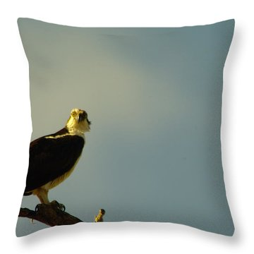A Wide Eyed Osprey Throw Pillow by Jeff Swan