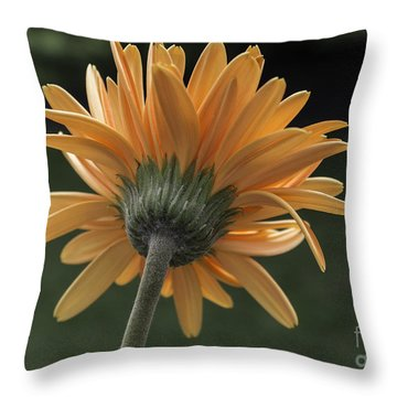 About Face Throw Pillow by Arlene Carmel