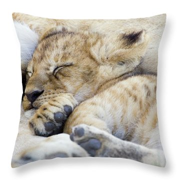 African Lion Cub Sleeping Throw Pillow by Suzi Eszterhas