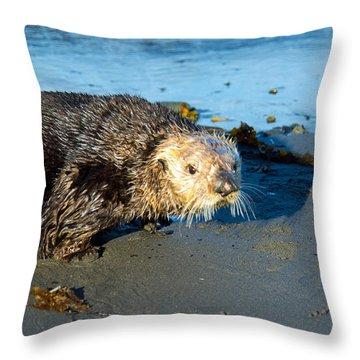 Alaska Sea Otter Throw Pillow by Debra  Miller