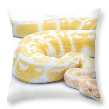 Albino Royal Python Throw Pillow by Michel Gunther