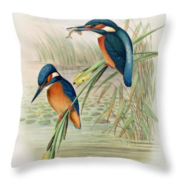 Alcedo Ispida Plate From The Birds Of Great Britain By John Gould Throw Pillow by John Gould William Hart