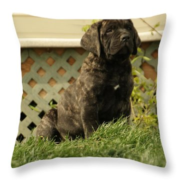 All Right Who Has My Chew Toy Throw Pillow by Jeff Swan