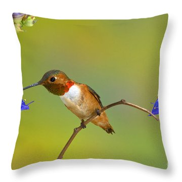 Allens Hummingbird Throw Pillow by Anthony Mercieca