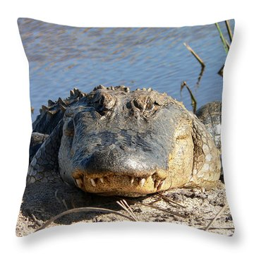 Alligator Approach Throw Pillow by Al Powell Photography USA