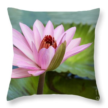 Almost In Full Bloom Throw Pillow by Sabrina L Ryan