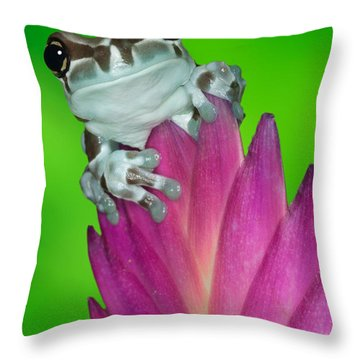 Amazon Milk Frog Trachycephalus Throw Pillow by Dennis Flaherty