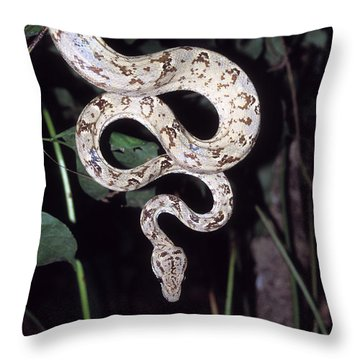 Amazon Tree Boa Throw Pillow by James Brunker