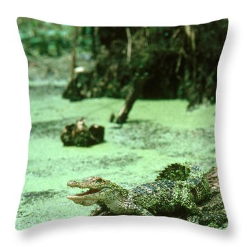 American Alligator Throw Pillow by Gregory G. Dimijian, M.D.