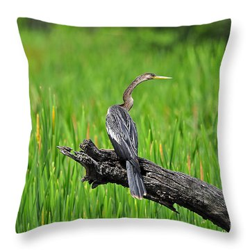 American Anhinga Throw Pillow by Al Powell Photography USA