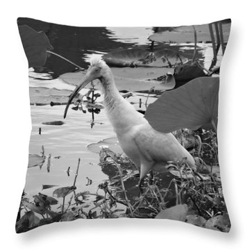 American White Ibis Black And White Throw Pillow by Dan Sproul