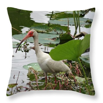 American White Ibis In Brazos Bend Throw Pillow by Dan Sproul
