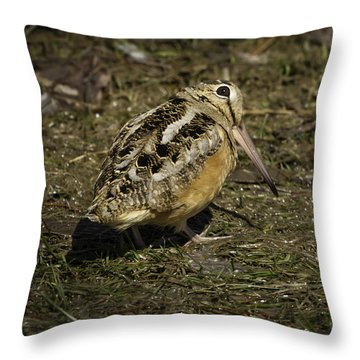 American Woodcock 2 Throw Pillow by Thomas Young
