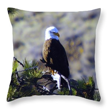 An Eagle In The Sun Throw Pillow by Jeff Swan
