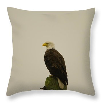 An Eagle Perched Throw Pillow by Jeff Swan
