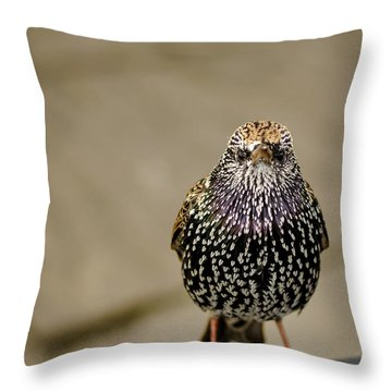 Angry Bird Throw Pillow by Heather Applegate