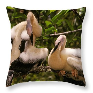Anhinga Chicks Throw Pillow by Ron Sanford
