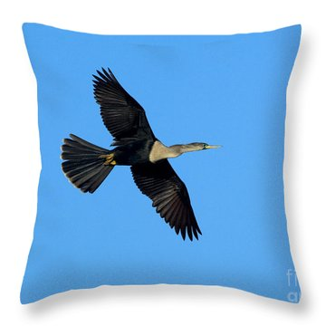 Anhinga Female Flying Throw Pillow by Anthony Mercieca