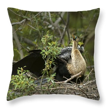 Anhinga Mama Throw Pillow by Phill Doherty