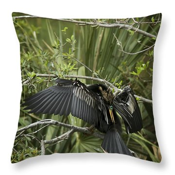 Anhinga Papa Throw Pillow by Phill Doherty