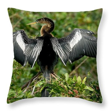 Anhinga Sunning Throw Pillow by Anthony Mercieca
