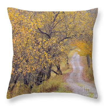 Apple Orchard Road Throw Pillow by Alan L Graham
