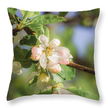 Apple Tree Blossom - Vintage Throw Pillow by Hannes Cmarits