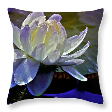 Aquatic Beauty In White Throw Pillow by Julie Palencia