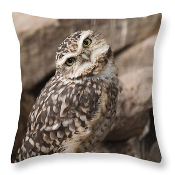 Are You Looking At Me? Throw Pillow by Anne Gilbert