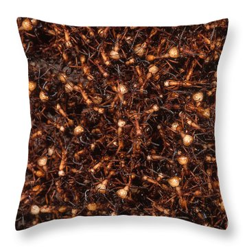 Army Ants Throw Pillow by Art Wolfe