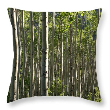 Aspen Grove Along Independence Pass II 2009 Throw Pillow by Jacqueline Russell
