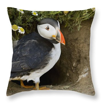 Atlantic Puffin At Burrow Skomer Island Throw Pillow by Sebastian Kennerknecht