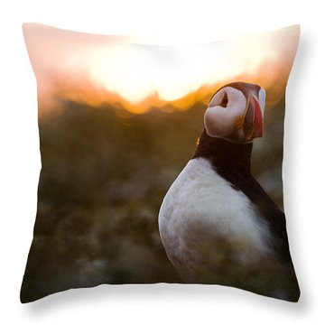 Atlantic Puffin At Sunrise Skomer Throw Pillow by Sebastian Kennerknecht
