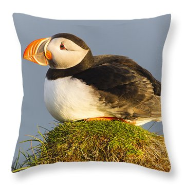 Atlantic Puffin Iceland Throw Pillow by Peer von Wahl