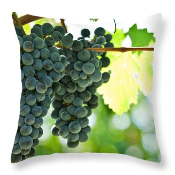Autumn Ripe Red Wine Grapes Right Before Harvest Throw Pillow by Ulrich Schade