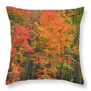Autumn Woods Throw Pillow by Mary Carol Story