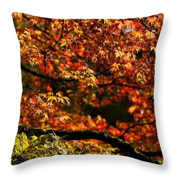Autumn's Glory Throw Pillow by Anne Gilbert